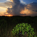 everglades national park, thunderstorm and sunset, miami-dade county, florida 1