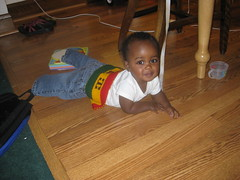 Milo Crawling