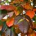 poison ivy color riverview drive detail