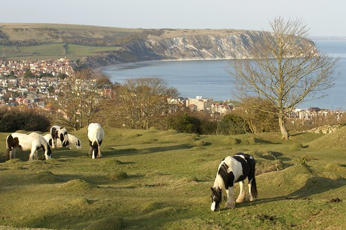 Tony's Horses by julian sawyer - Purbeck Footprints