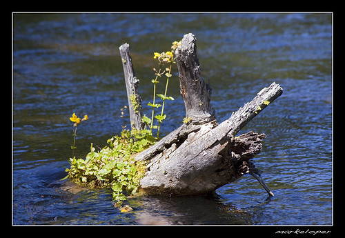 flower fall water oregon canon river log stream pacific northwest sunriver submerge 50d markeloper