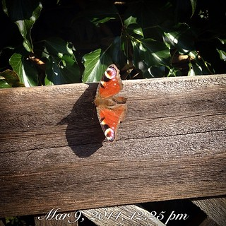 Little butterfly , feels like summer!