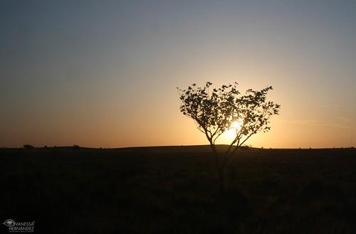 trip travel viaje tree tourism sunrise arbol venezuela amanecer vane turismo savanah llano sabana apure capanaparo canonefs1855mmf3556is vnss canoneosdigitalrebelxs vanhercar14 862venve vanessahernandezphotography vnsschc lavidaquememerezco