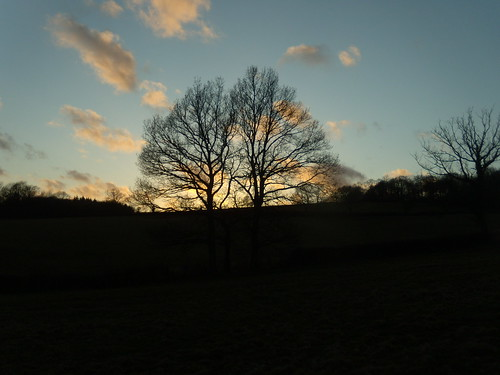 Trees against setting sun