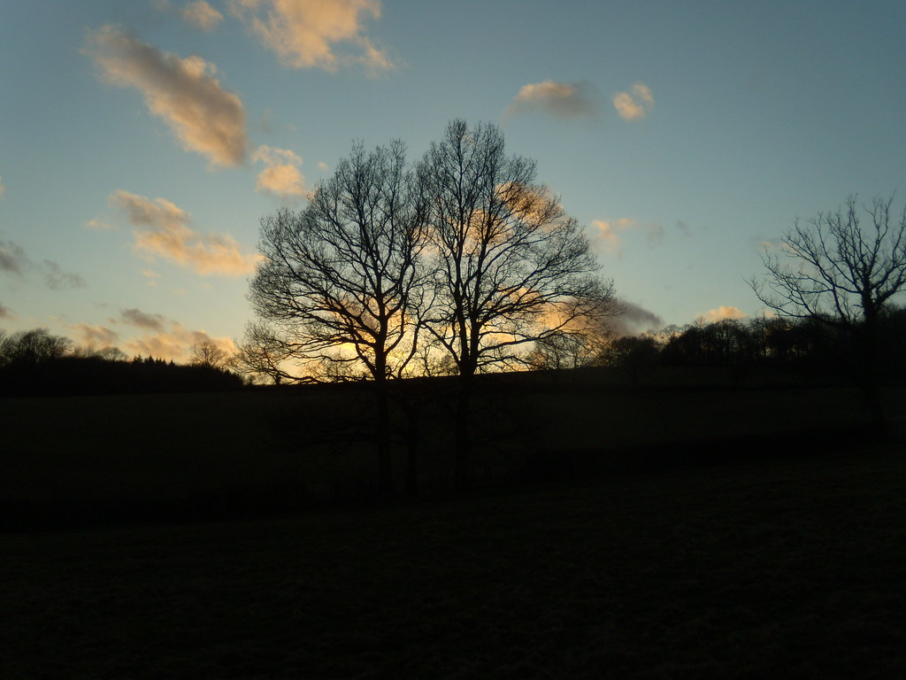 Trees against setting sun Wadhurst Circular