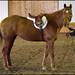 Spring Into Fun Horse Show