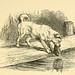 Aesop: Weir illustrations