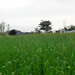 Small photo of Fields in Malpur Village (Islamabad)