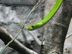 Moving snake