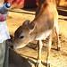 Bhaktivedanta Eco-Village *Upd 3/23