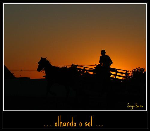 sunset brazil horse sun sol brasil sunrise contraluz wagon sony pôrdosol pelotas cavalo carroça entardecer charrete h50 colorphotoaward platinumheartaward thenewselectbest