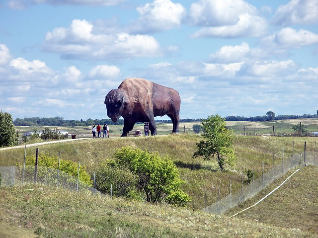 nd08i15 jamestown bison  north dakota 2008