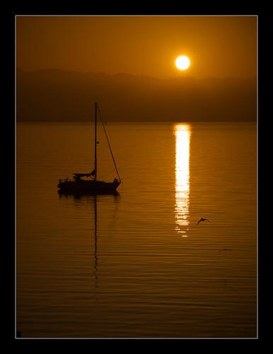 california lighting morning sky sun reflection bird water sunshine birds fog sailboat sunrise oakland boat haze glow olympus explore pa sail ripples e3 alamedacounty daytrip zd sanfranciscocounty 1260mm olympuse3