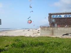 Kites flying near the D River Wayside