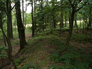Im Vogtland Wald fragt ein Irrlicht 387