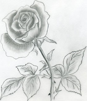 3377173342 for How to draw a really good flower
