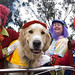 Christmas Clowns and Pooch