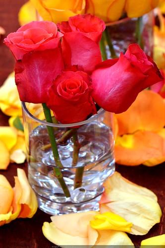 roses     MG 2225