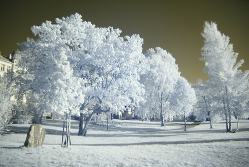 park ir infrared photohunt puisto vaasa infrapuna