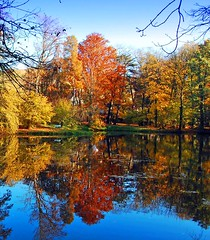 Autumn pond reflection