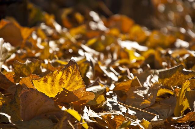 Las hojas...