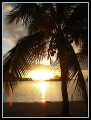 Coconut Tree at Fiji
