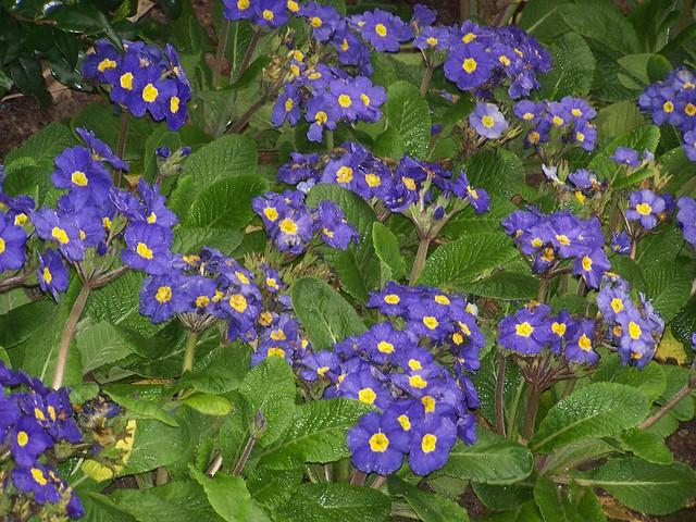 lule te bukura ka kavaja flickr photo sharing