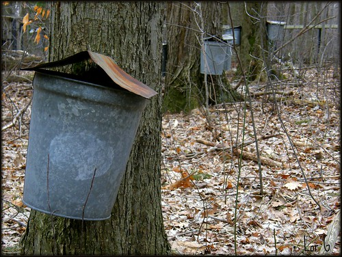 Maple Sugar Farm Tours in West Bridgewater Ma