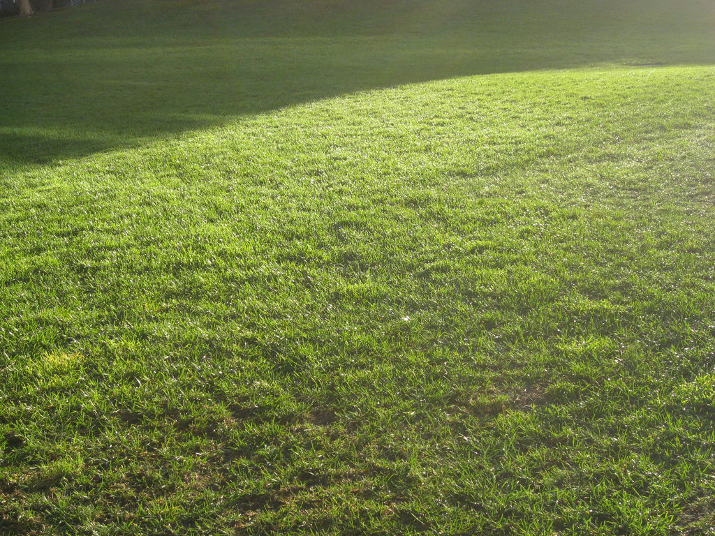 Grassy Field - a photo on Flickriver