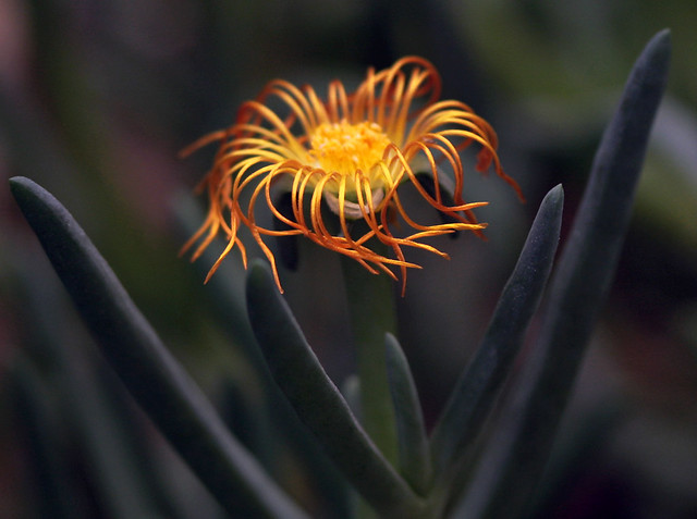 Glowing Tendrils