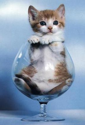 Bahasa dan Kode Komunikasi yang Sering Digunakan Kucing Peliharaan Agan