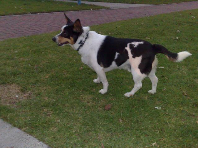 Dog Park Addison Tx