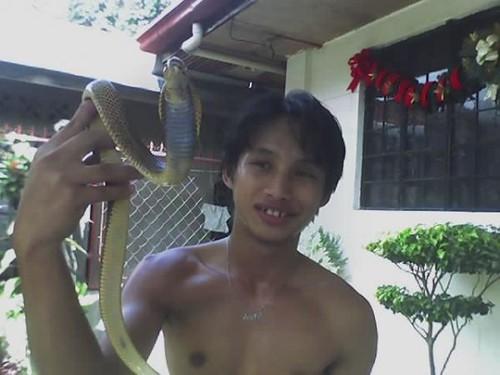 Philippine Cobra