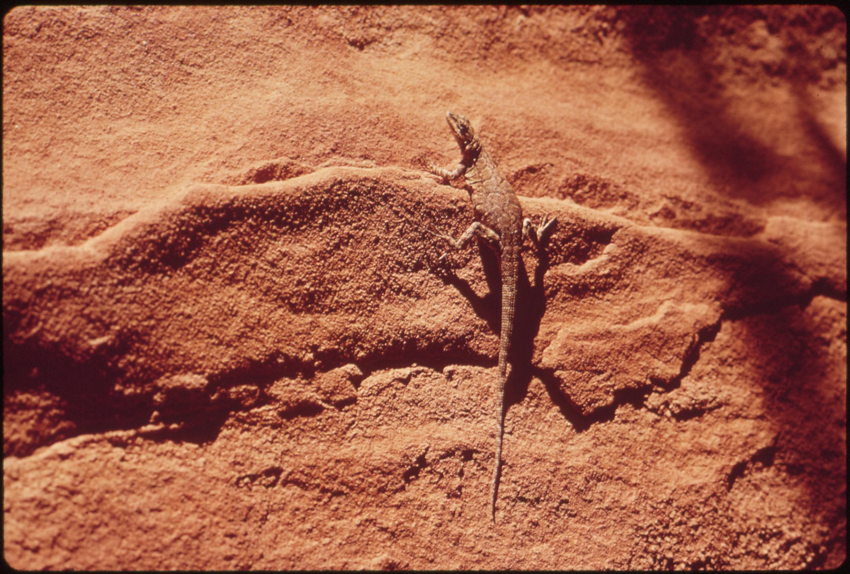Lizard, 05/1972