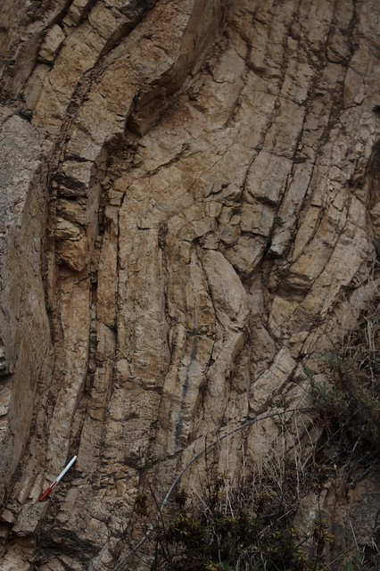 Folded outcrop of marine sediments in Berkeley, CA.  Image credit: Laikolosse (CC-BY-NC).