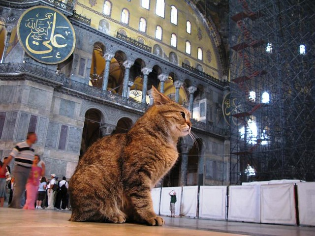 Istanbul: Α cat in Aya Sofia / O γάτος της Αγιάς Σοφιάς