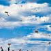 Small photo of A Million Kites