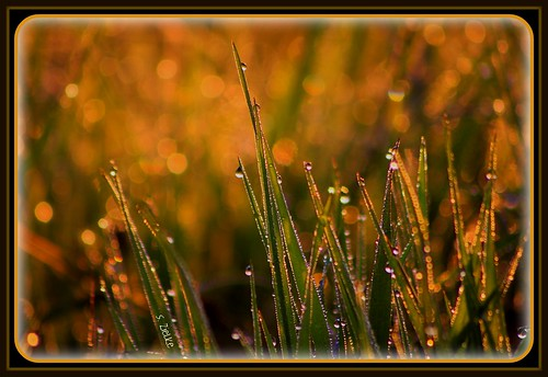 Dewdrops in the Dawn (Happy Mother's Day) - EXPLORED with much gratitude | by Sheree (Here intermittently)
