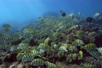 Hanauma-peixinhos