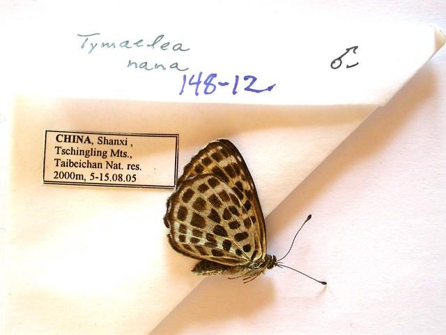 Бабочки №90 - Перломутровка дафна (Brentis daphne)