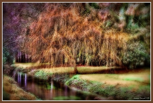 county ireland winter castle stone reflections cork eire pixie explore willow blarney paysage weepingwillow weeping oconnor gaelic hdr blarneycastle picnik lonelytree mcpherson countykerry jamiegrant johnnydull