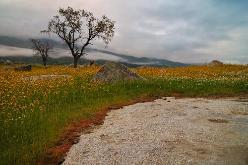 california landscape nikon d300 tokinaatx124prodx nikond300 shotwithstevemendenhall