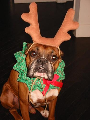Merry, er, Christmas