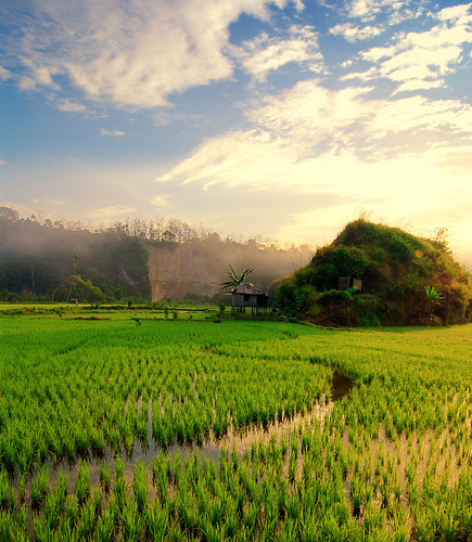 morning field sunrise sumatra indonesia landscape nikon warm day rice paddy cloudy wideangle tokina lampung sumatera naturesfinest goldenglobe blueribbonwinner d80 flickrsbest anawesomeshot theperfectphotographer nikonflickraward batubrak