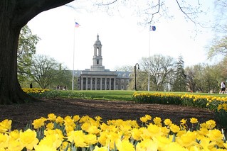 Daffodils on the Old Main Lawn