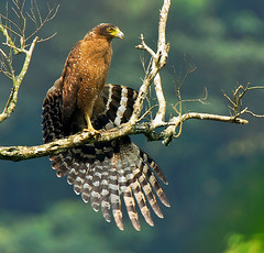 Wings spreading
