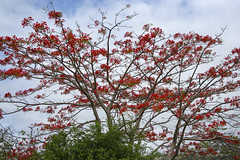 Sítio Serra Rica