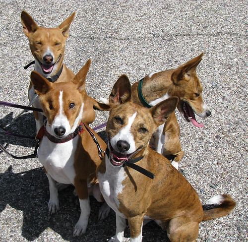 Dingo Fence  Wikipedia