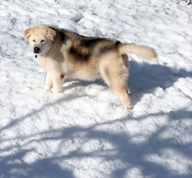 Anderson Sc Pet Smart Dog Grooming