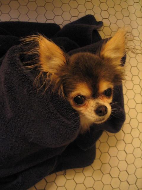 Dog Bandages Pet Valu
